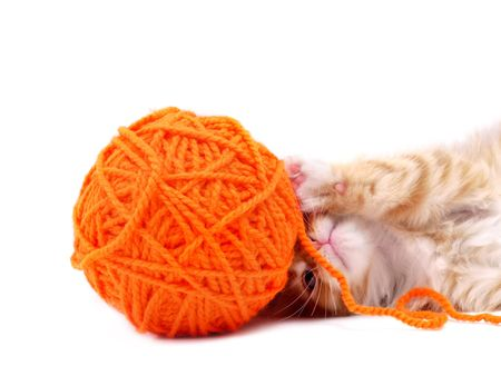 Kitten playing with orange ball of wool shot over white background Stock Photo