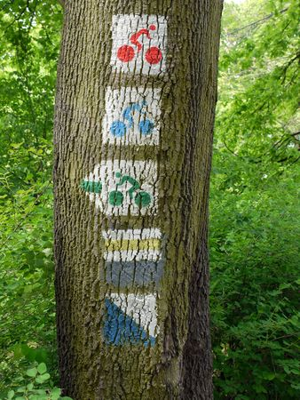 Group of bicycle route signs painted on tree trunk photo