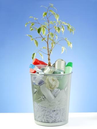 offshoot: Plantlet growing in metal trash bin full of domestic garbage shot over blue background