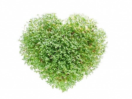 environmental awareness: Heart shaped from watercress plant on white