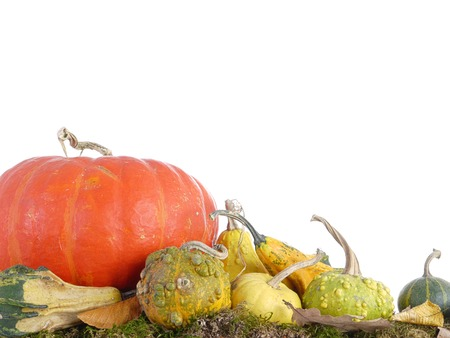 Composition of summer squashes, pumpkins and dead leaves on white background photo