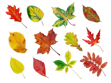Herbarium of various tree leaves in fall colors Stock Photo