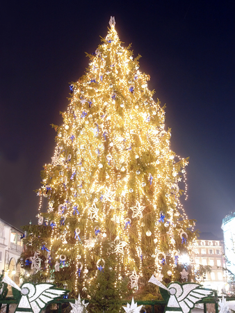 main market: Giant christmas tree illuminated on the Main Market
