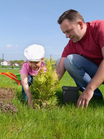 Dad and his little daughter planting together thuja tree in the garden