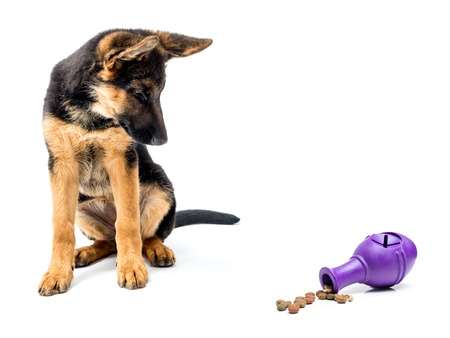 Gerrman shepherd puppy looking curiously at rubber treat release puzzle toy shot on white