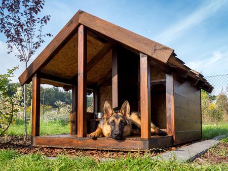 German shepherd resting in its wooden kennel photo