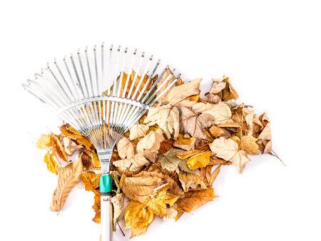 swept: Pile of dead fall leaves swept by metal fan rake shot on white Stock Photo