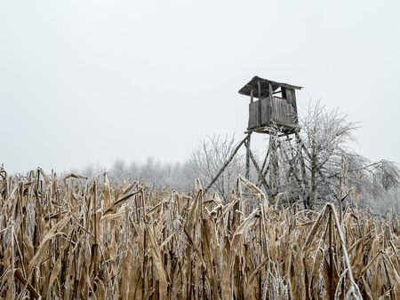 stance: Wooden deer blind in the middle of the corn field