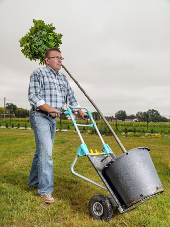 hand truck: Young man carrying potted oak tree using hand truck to be planted in his garden