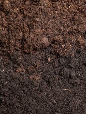 Cross-section of garden soil
