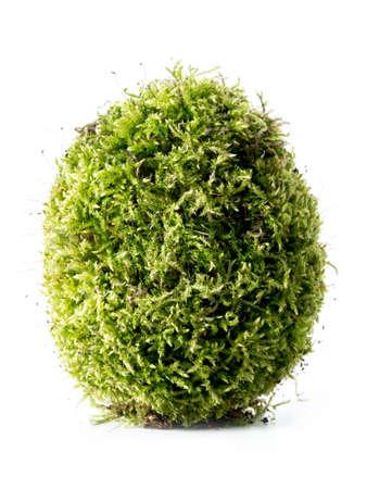 giant easter egg: Giant moss-grown egg over white background Stock Photo