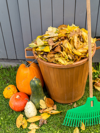dumped: Pile of dead fall leaves dumped into plastic bin, pumpkins and fan rake resting against wooden shed