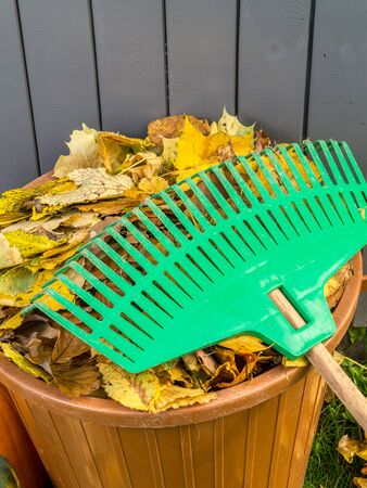 dode bladeren: Pile of dead fall leaves swept and dumped into plastic bin with fan rake resting on it Stockfoto