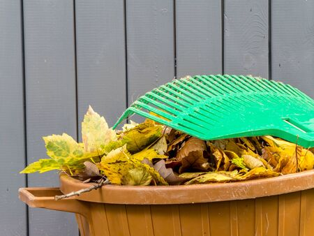swept: Pile of dead fall leaves swept and dumped into plastic bin with fan rake resting on it Stock Photo
