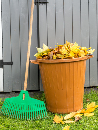 swept: Pile of dead fall leaves swept and dumped into plastic bin with fan rake resting against wooden shed