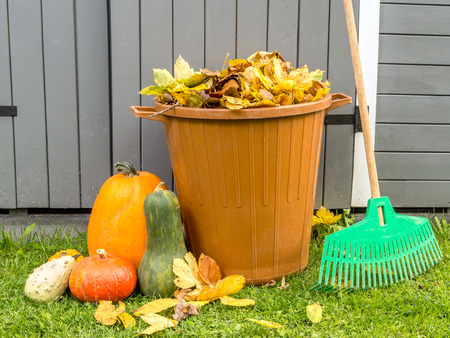 autumn garden: Pile of dead fall leaves dumped into plastic bin, pumpkins and fan rake resting against wooden shed