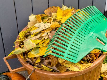 yard: Pile of dead fall leaves swept and dumped into plastic bin with fan rake resting on it Stock Photo