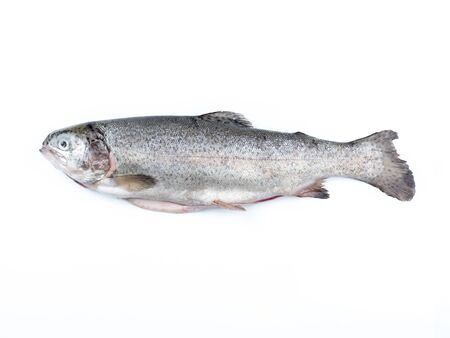 rainbow trout: Rainbow trout isolated on white background