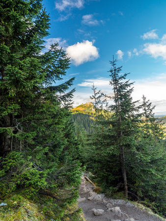 giewont: Mount Giewont seen through the spruce trees from the alpine trail in the Tatra mountains, Poland