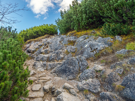mugo: Alpine touristic trail in High Tatra, Poland