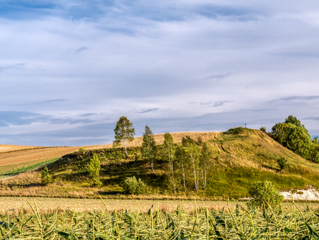 hillock: Countryside landscape with birch trees growing on hillock Stock Photo