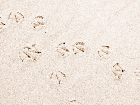 footmark: Seagull footprints on sand beach