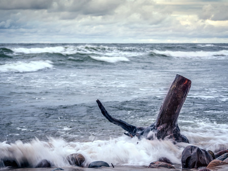 ashore: Tree limb washed ashore being hit by stormy sea waves Stock Photo