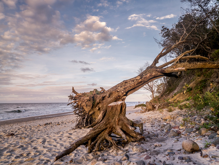 Beach with a blown down tree  Stock Photo