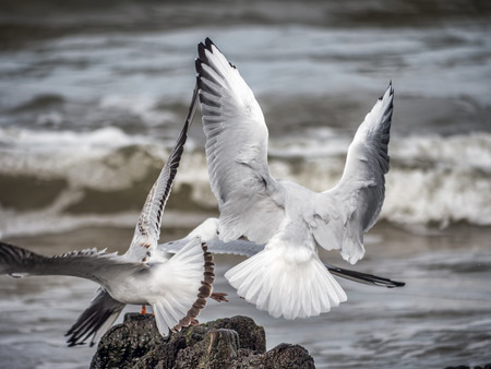 Seagulls flying away after sitting on wooden water breakers