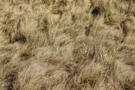 Field of dry grass shot from above