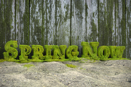 3D rendering of fresh green Spring Now text formed from ivy branches aganist old wooden fence