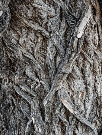 Closeup of old willow tree bark Stock Photo
