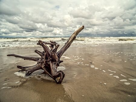 Tree limb washed ashore on wet sand Stock Photo