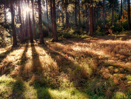 Autumn forest trees backlit casting long shadows