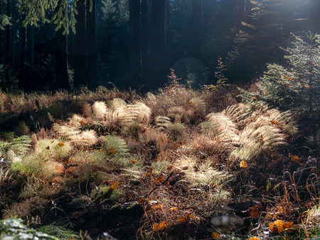 Morning sunlight backlighting forest plants in autumn time