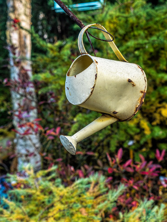 Old watering can as garden decorative element