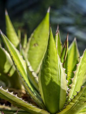 Closeup shot of cactus plant