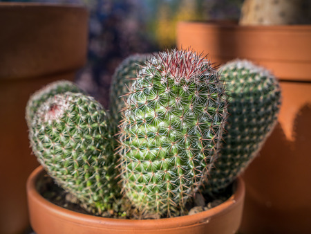 Closeup shot of potted cactus plant