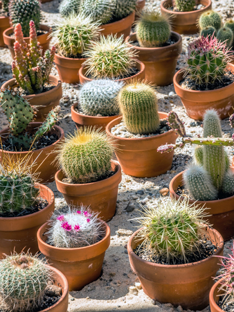 Shot of assorted potted cactus plants