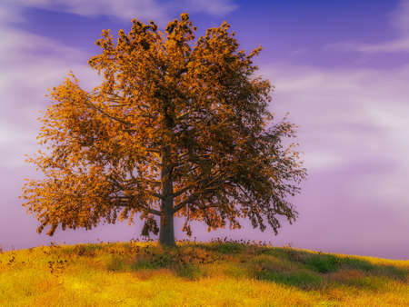 Lonely old oak tree in full fall colors growing on hillock against sky