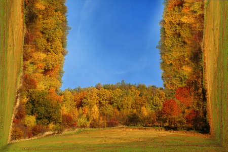 Deciduous and coniferous forest in fall colors with bending perspective effect