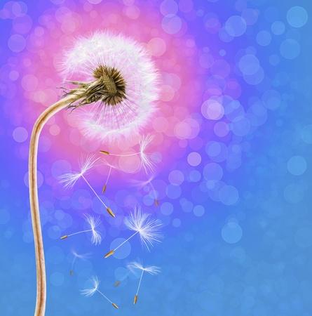 dof: Dandelion on the long stem at sunrise, on defocused background