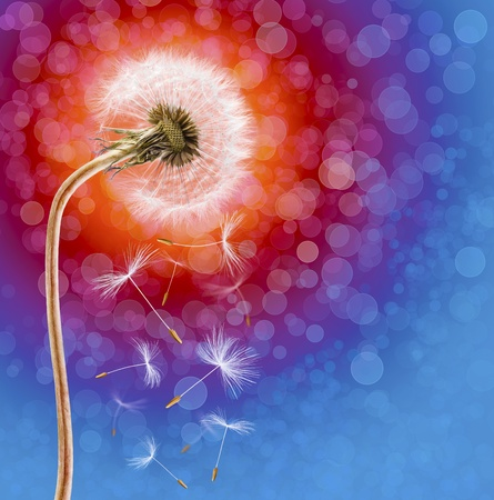Dandelion on the long stem at sunset, on defocused background Stock Photo - 13180595