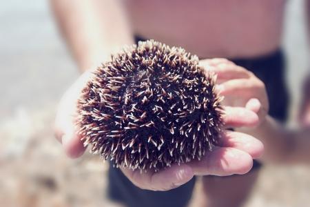 Sea urchin on the hand