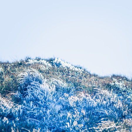 Beautiful frozen grass on autumn day in the mountains Stock Photo