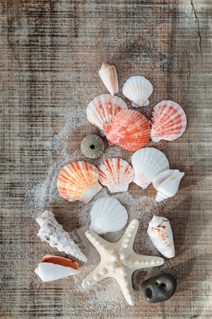 Sea shells from beach on wooden background