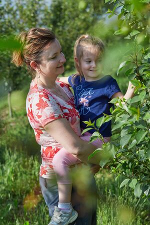 Mother showing her daughter cherries growing in a orchard Reklamní fotografie