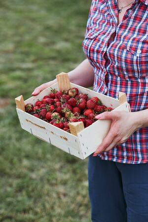 Woman holding container filled with fresh strawberries picked in home fruit garden. Candid people, real moments, authentic situations