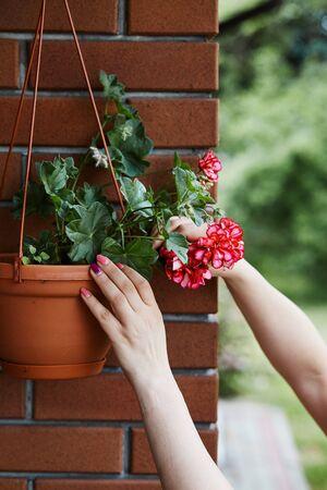 Woman arranging the flowers in a flower pot hanging on a patio. Candid people, real moments, authentic situations