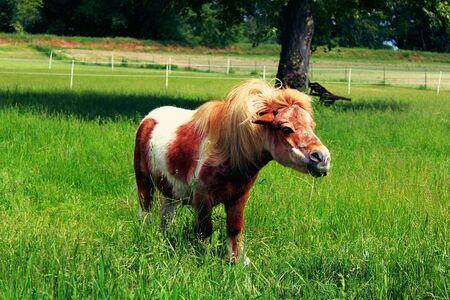 pony in the pasture.